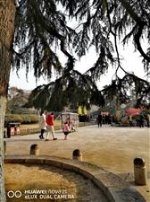冬日的公园