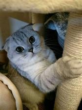 寻猫!!!寻猫!!!寻猫!!!