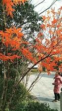 快来看看寒冷冬天里的树木吧!