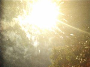 阳光穿过树叶,真好