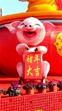 猪年大吉!新年快乐!