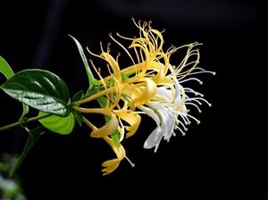 情人节到了,送给大家一束最美的花!
