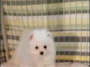 �V�犬�I