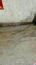 潢川一小街道屎尿满街流,有没有人管管!