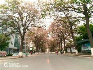 四月梧桐街