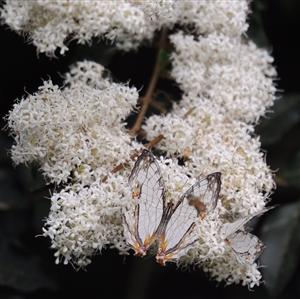 【自然生态】《花》你若盛开,蝴蝶自来摄于珠海度假村酒店园内