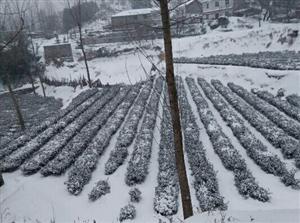美丽的雪景,美丽的村!