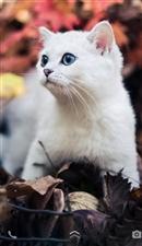一组动物之美人类生存在同一地球上,无奇不有,无奇不在,这就是本图所示的有生命之动物