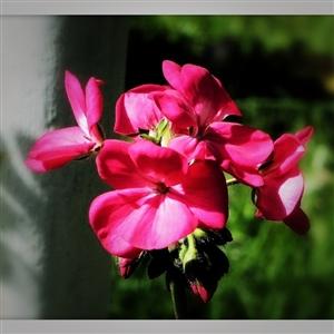 一组花卉照