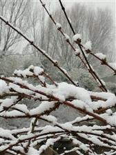 春雪即景・博兴雪
