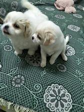 寻找爱狗人士