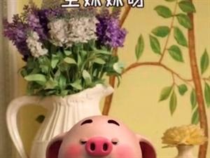 豬小屁搞笑段子,祝大家周末愉快!