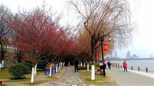汉中初春风景