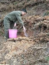 永丰县官山林场高标准推进国储林建设