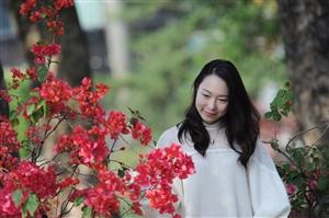 百里花墙惊艳珠海,最美勒杜鹃红遍整个度假村
