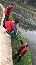 来凤酉水河两边又出现了一群穿红背心的