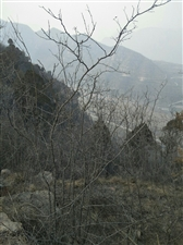洪门古寺看仙峰