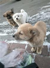 小狗狗寻找有缘的爱心家人,两个月大,已可以正常喂养,希望找到真心疼爱它们的好粑粑好麻麻,领养人需提供