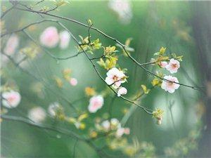 惊蛰春日惊醒,万物惊喜
