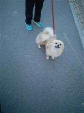 谁丢的狗,3/7号在黄河八路北中校门口刚捡到的!联系方式:15376496552