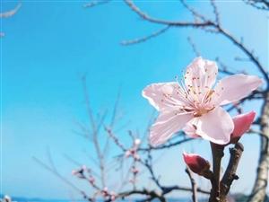 春天到了,好像去看花,彭水哪的花开了呀