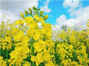春天到了,好像去看花,亚博PP电子哪的花开了呀