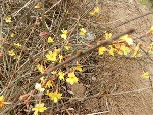 春天的小花