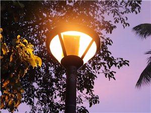 夕阳无限好,饭后走两步!