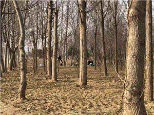 近日,在文昌生态园里面游玩,发现公园里多处有被出行的游人破坏的地方,绿化小苗,草坪被车碾?#36141;?#36393;坏的,