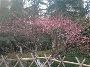 阳春三月好美丽