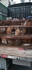 泸州市江阳区农林局执法大队截获一辆非法运输猫狗车辆