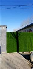 植树节种草~欢迎围观!