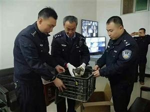 陕西山阳两警联合救助受伤雀鹰