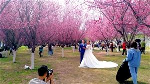 威尼斯人网上娱乐平台春色柳绿梅红天蓝云白