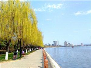 汉中江边柳绿梅红蓝天白云