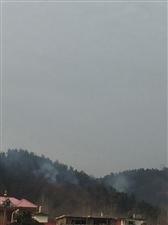 封湾后山发生山火。