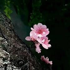 一片叶,落在哪里都是归宿。一朵花,开在哪里都是芳香。