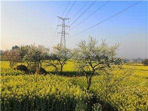 每一朵油菜花都像一朵镂空的小灯笼。当万亿朵油菜花一同尖叫,春天这壶酿在时光深处的老酒,就会将每一双拥