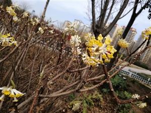 【摄影分享】庭梅有怜意,枝头一点春