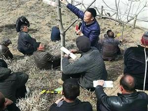 """""""产业扶贫的春天""""高坝店镇举办核桃、连翘种植管理培训"""