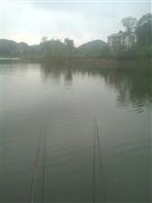 请赤城湖管理局有效管理,最近几天,团结桥一线几个弯,有人下拦网整鱼,三合农家院下的两个湾特别严重,天