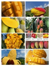 海南热带纯天然水果【出售】