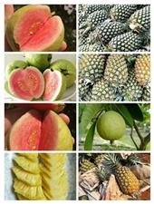 海南热带水果【出售】