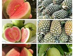 海南三亚热带水果
