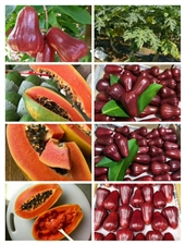海南热带水果