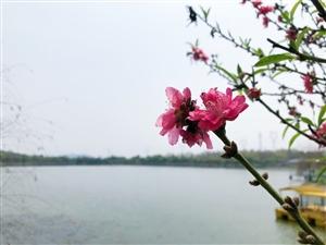 花儿朵朵开~揭东云路桃园山庄