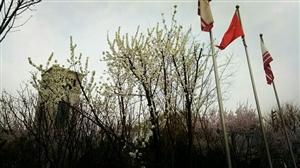 春天,悄然而至