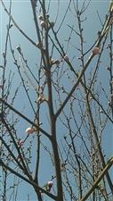 春天到了,油菜花、桃花都开了……