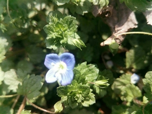 野花的春天