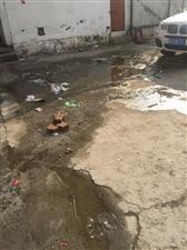 霍邱老三中学校操场看台下化粪池已满,到处都是,无人管理